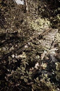 Track, plants, threshold, wild, foliage, digitally edited, RailArt