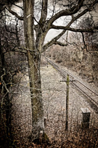 Tree, track, platform, telegraph pole, digitally processed, RailArt