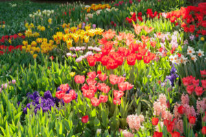 Island Mainau in spring with tulips, narcissi and hyacinths, Lake Constance, Baden-Wuerttemberg, Germany