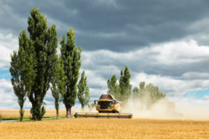 Harvester at the grain harvest, Saxony, Germany,