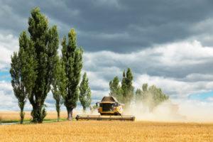Mähdrescher bei der Getreideernte, Sachsen, Deutschland,