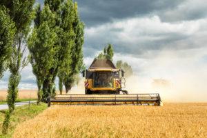 Harvester at the grain harvest, Saxony, Germany,
