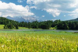 Wildblumenwiese am Geroldsee mit Blick zum  Karwendelgebirge, Oberbayern, Bayern, Deutschland