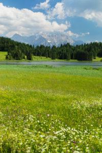 Flower meadows at Geroldsee against Karwendel Mountains, Upper Bavaria, Bavaria, Germany