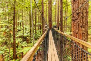 Redwood Treewalk, Baumwipfelpfad, Rotorua, Bay of Plenty, Nordinsel, Neuseeland, Ozeanien