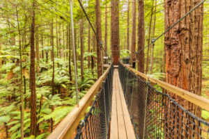 Redwood Treewalk, Tree Top Walk, Rotorua, Bay of Plenty, North Island, New Zealand, Oceania