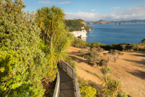Cathedral Cove Walk, Coromandel Peninsula, Waikatu, North Island, New Zealand,
