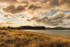 Cooks Beach, Coromandel Peninsula, Waitako, North Island, New Zealand, Oceania