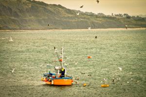 Fischerboot vor der Küste, oranger Kutter, Möwen fangen Fische,