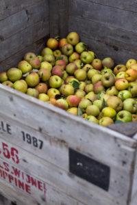 Kiste mit Äpfeln, direkt vom Bio-Bauern in den Niederlanden, frische saftige gesunde Lebensmittel, die perfekte Ernährung, Obstmarkt, Gemüsestand