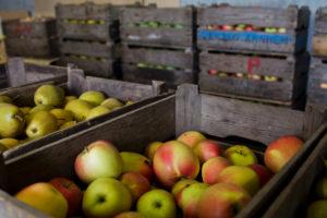 Kiste mit Äpfeln und Birnen, direkt vom Bio-Bauern in den Niederlanden, frische saftige gesunde Lebensmittel, die perfekte Ernährung, Obstmarkt, Gemüsestand