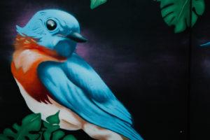 Wandmalerei, bunter Vogel, Reykjavík, Island