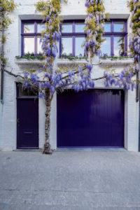 Belgien, Westflandern, Brügge, mittelalterliche Stadtidylle mit Blauregen 'Wisteria sinensis rolific' an Fassade,