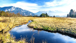 Stream course and single delight in autumn, Murnauer Moor, Werdenfelser Land, district Garmisch-Partenkirchen, Bavaria, Germany