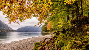 Autumn forest at the Walchensee, district Bad Tölz, Upper Bavaria, Bavaria, Germany