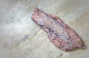 DIY, String Art, Feather,