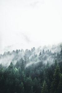 Italy, the Dolomites, Trentino, Vigo di Fassa, cloud-overcast wood