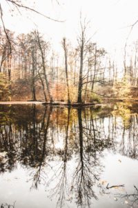 Germany, Saxony, Chemnitz, lake, trees, autumn