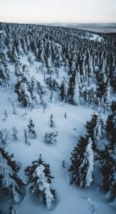 Czech Republic, Ore Mountains, Keilberg, forest, winter landscape
