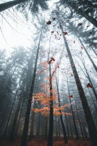 Germany, Saxony, Ore Mountains, forest, fog, autumn