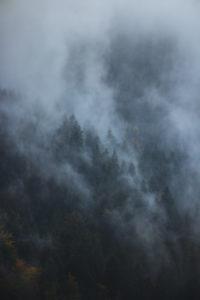 Germany, Baden Württemberg, Black Forest