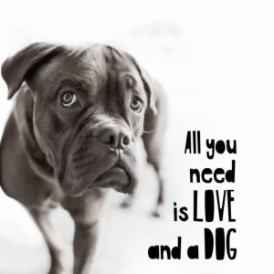 Postcard motif 'All you need is Love and a Dog',