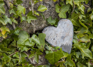Wall with ivy, heart from stone, close up, still life