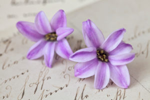 Two individual hyacinth flowers, close-up, still life