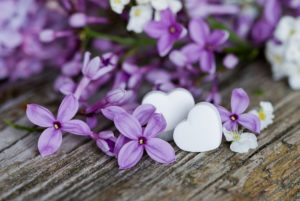 Lilac flowers with heart pendant, close-up, still life