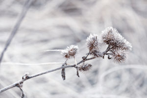 Delicate plants with hoarfrost on cold winter day