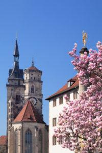 Alte Kanzlei und Stiftskirche mit Magnolienbaum, Stuttgart, Baden-Württemberg, Deutschland