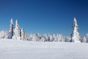 Winter scenery at the Kandel, Black Forest, Baden-Wurttemberg, Germany