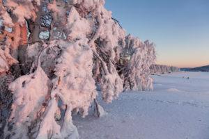 Winter scenery with snow covered Windbuchen at sundown, Schauinsland, Black Forest, Baden-Wurttemberg, Germany