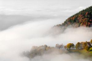 Fog on the Wiedener Eck, Black Forest, Baden-Wurttemberg, Germany
