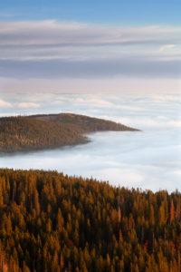 Sea of fog at the Feldberg at sunrise, Black Forest, Baden-Wurttemberg, Germany