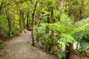 Parakaunui Falls Walk, Tropical Rainforest, The Catlins, Otago, South Island, New Zealand, Oceania