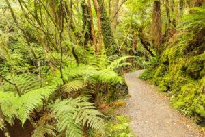 McLean Falls Walk, The Catlins, Otago, South Island, New Zealand, Oceania