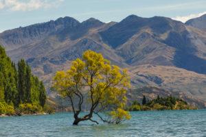 Lake Wanaka, Mount Aspiring National Park, UNESCO World Heritage Site, Otago, South Island, New Zealand, Oceania