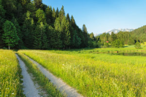 Weg durch Blumenwiese am Geroldsee, Oberbayern, Bayern, Deutschland