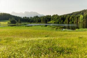 Blumenwiesen am Geroldsee gegen Karwendelgebirge, Oberbayern, Bayern, Deutschland