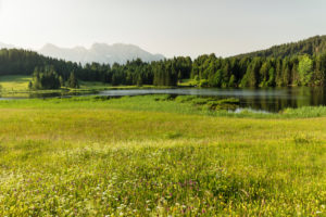 Flower meadows at Geroldsee against Karwendel Mountains, Upper Bavaria, Bavaria, Germany