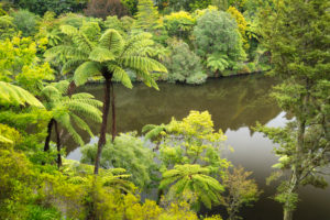 Pukekura Park, Botanical Gardens, New Plymouth, Taranaki, North Island, New Zealand