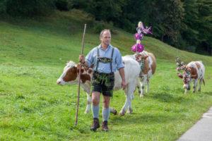 Almabtrieb von der Königsbachalm nach Schönau am Königssee, Familie Springl vom Aschbachhof, Berchtesgadener Land, Oberbayern, Bayern, Süddeutschland, Deutschland, Europa