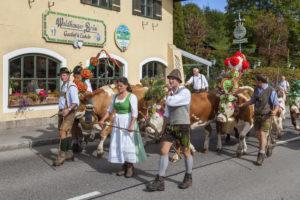 Heimtrieb der Kühe von Schönau zum Bauernhof Rennerlehen, Almabtrieb am Königssee der Familie Resch, Berchtesgadener Land, Oberbayern, Bayern, Süddeutschland, Deutschland, Europa
