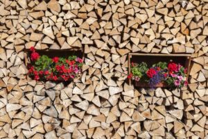 Geraniums in a pile of wood, renewable energies