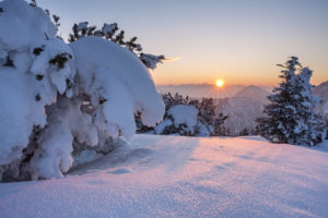 Mountain pine in the snow, mountain Herzogstand, view to Estergebirge, lake Walchensee, Bavarian Prealps, Upper Bavaria, Bavaria, southern Germany, Germany, Europe