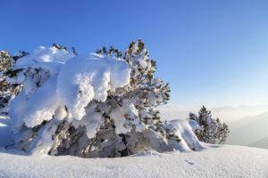 Winter am Herzogstand, Walchensee, Bayerische Voralpen, Oberbayern, Bayern, Süddeutschland, Deutschland, Europa