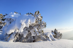 Winter at the Herzogstand, lake Walchensee, Bavarian Prealps, Upper Bavaria, Bavaria, Southern Germany, Germany, Europe