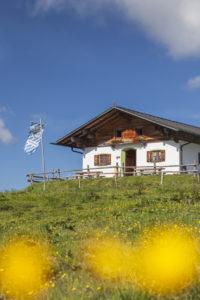 Piesenhauser Hochalm in den Chiemgauer Alpen, Marquartstein, Chiemgau, Oberbayern, Süddeutschland, Deutschland, Europa