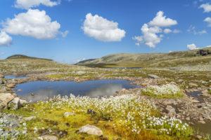 See an der  Norwegischen Landschaftsroute Aurlandsvegen durchs Aurlandsfjellet, Aurlandsvangen,  Sogn og Fjordane, Norwegen